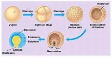 human reproduction emedicalprep