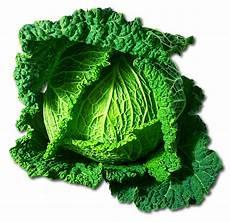Wirsing Roh Essen - kohl wirsing gem 252 se 183 kostenloses foto auf pixabay