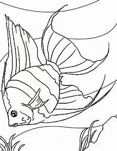 angelfish coloring page handipoints malvorlagen fisch