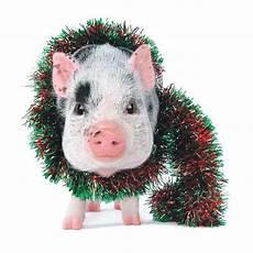 christmas pig search cute pigs pig christmas animals