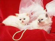 Beautiful Cat Backgrounds