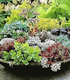 winterharte sedum mischung 6 pflanzen g 252 nstig