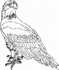 Www Malvorlagen Tiere Gratis De Adler 3 Ausmalbild Malvorlage Tiere