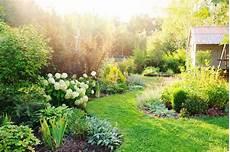 hortensie einpflanzen alles zum pflanzen in topf beet