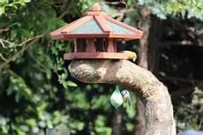 vogelhaus selber bauen finde jetzt deine bauanleitung