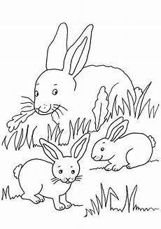Tierbaby Ausmalbilder Kostenlose Malvorlage Kaninchen Kaninchenfamilie Zum Ausmalen