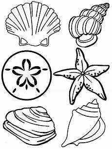 malvorlagen meerestiere luxus free printable seashell