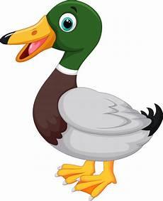 duck vector premium