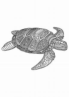 mandala coloring pages lizard 17931 image result for free mandala coloring page with a lizard or crocodile ウミガメ イラスト ウミガメ イラスト
