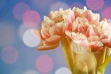 Gambar Tangan Mekar Cahaya Menanam Daun Bunga Bunga