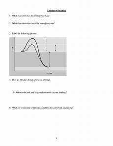 12 best images of enzyme graph worksheet enzymes temperature worksheet linear graphs