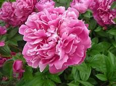 fiori di giugno fiori di giugno fiori per cerimonie fiori di giugno