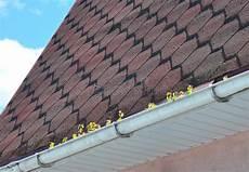 Allgemeine Gossen Probleme Mit Moos Auf Dem Dach Stockbild