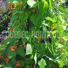 horticole ca photos de plantes et fiches