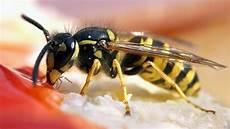 Wespen Vertreiben Die Besten Tipps