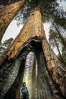 eqoi7a 8 great reasons to ride california s sequoia forests