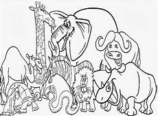 Zootiere Malvorlagen Animal Coloring Pages For At Getdrawings Free