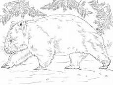 Malvorlagen Zum Ausdrucken Wombat Wombat Coloring Page Supercoloring