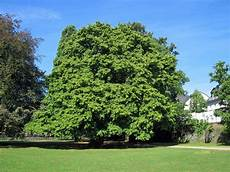 nussb 228 ume nussbaumarten