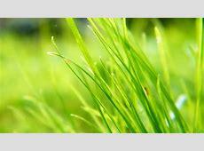 55  Plants Desktop Wallpapers   Download at WallpaperBro