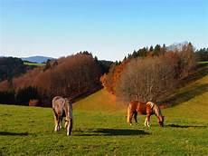 pferde im herbst 2 foto bild jahreszeiten herbst