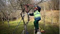 bäume schneiden bei baumschnitt herbst io16 casaramonaacademy