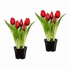 tulpen im topf in der tulpen im topf x 5 2er set t 228 uschend echt aussehende