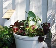 Container Gardening In Houston
