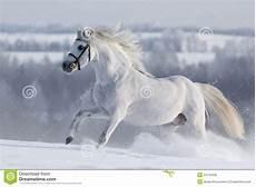 Ausmalbilder Pferde Im Winter White Runns On The Hill Stock Photo Image Of