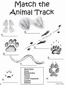 nature and animals worksheets 15101 13 best animal tracking unit images on animal tracks science and woodland animals