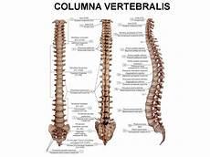 Anatomi Klasifikasi Tulang Berdasarkan Lokalisasi