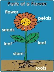 parts of plants kindergarten worksheets 13581 parts of a flower science exploration for preschool and kindergarten kidssoup