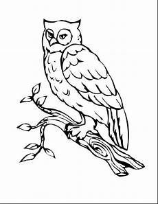 barn owl coloring page at getcolorings free