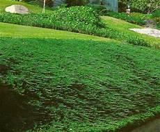 plantes couvre sol pour talus table basse relevable