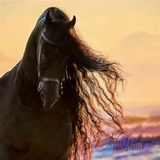 zeig mir bilder pferden f 252 r bilder und