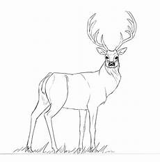 cerf dessin facile comment dessiner un cerf 233 par 233 dessindigo