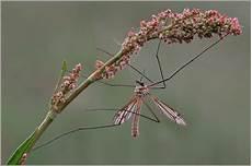 schnake im zimmer spinnenphobie