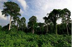 Merindu Hutan Hijauku