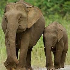 Foto Foto Binatang Gambar Gajah