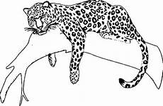 jaguar animal drawing at getdrawings free