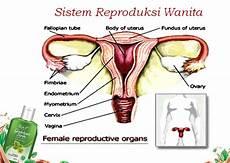 Gambar Alat Reproduksi Wanita Dan Bagiannya Berbagai Alat
