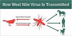 Progressive Charlestown Human West Nile Virus