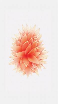 flower wallpaper iphone se new iphone wallpapers images яблоко обои обои