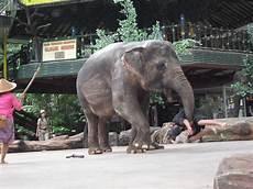 Gajah Show Dalam Gambar My Communication Forum