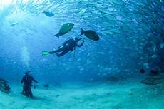 padi open water course 3 days now is the time to dive