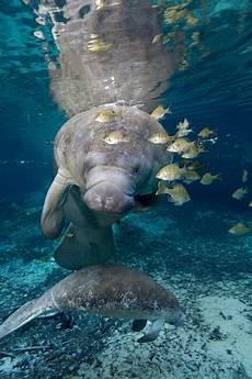 Quallen Malvorlagen Resort 943 Best Images About Animals On Prehistoric