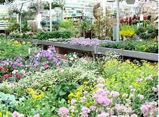 Gehoelze Fuer Jede pflanzen f 252 r garten und balkon g 228 rtnerei pfitzner im
