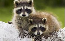 Binatang Paling Keren Dan Lucu Animal Planet