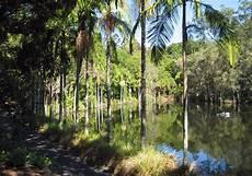 Garden Brisbane by Australian Gardens At The Brisbane Botanic Gardens Brisbane