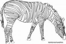 Zebra Ausmalbilder Malvorlagen Zebra Gratis Ausmalbild